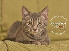 Emily is available to adopt from Coronado Veterinary Hospital, http://www.nadovet.com