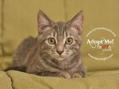 Emily is available to adopt from Coronado Veterinary Hospital, http://www.nadovet.com