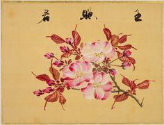 Pinturas sobre seda: Un libro de bocetos de sakura (flores del cerezo).