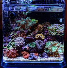 Coral Reef Aquarium, Saltwater Aquarium Fish, Nano Aquarium, Saltwater Tank, Marine Aquarium, Unique Fish Tanks, Cool Fish Tanks, Nano Reef Tank, Reef Tanks