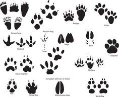 Spoor is the kanji of food. Leave the trail on your bodies with paw print tattoos.