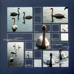 What a fantastic layout for duck park pics!!