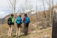 Wandern im Waldbrandgebiet Der Bus, Backpacks, Tours, Alps, Hiking, Woods, Travel, Backpack