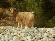 Bwana joen kynästä: Evolutionisti söi ruohoa ja leikki olevansa vuohi ...
