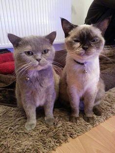 Manyana und Baylie  Katze | Pawshake