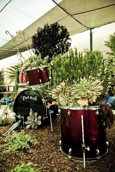 repurposed set of drums become planters...wishing I hadn't sold mine on the last garage sale.:(