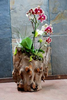 Gorgeous Orchid Arrangements Ideas To Enhanced Your Home Beauty 38 Indoor Orchids, Orchids Garden, Succulents Garden, Indoor Plants, Orchid Flower Arrangements, Orchid Planters, Most Beautiful Flowers, Exotic Flowers, Driftwood Planters