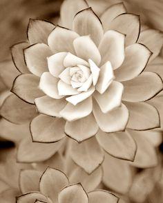 Photographie brun automne plante succulente par PenumbraImages