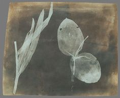 William Henry Fox Talbot - Leaves of Orchidea. Earliest photographic registration on a negative. Calotype or Talbotype process. Published 1839. claimed to have been taken in 1834. (pre Daguerre)