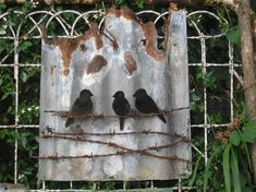 I like the idea of rusty barbed wire as an accent on corrugated metal signs Tin Birds on wire & rusty corrugated iron Barb Wire Crafts, Metal Crafts, Metal Projects, Art Projects, Metal Yard Art, Metal Art, Barbed Wire Art, Barn Tin, Tin Art