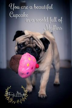 Cupcake the Pug Pug Love, I Love Dogs, Pug Quotes, Pug Pictures, Animal Pictures, Baby Pugs, Cute Pugs, Cutest Dogs, Pug Puppies