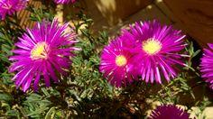Le piante e i fiori della mia terrazza e...oltre