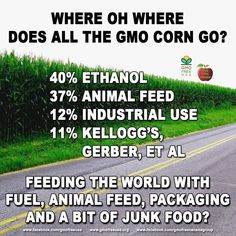"Where does all the GMO corn go? Are GMOs really feeding the world? As far as we can tell, not a single starving child has been saved by drinking ethanol fuel, eating animal feed, or eating packaging or lawn fertilizer... and that's where the bulk of GMO corn is going. The rest is going into junk food like Kellogg's and Gerber. GMO corn: NOT FEEDING THE WORLD.  About animal feed: Yes, some of us eat the animals that are fed GMOs. But when we talk about ""feeding the world,"" we're not just…"