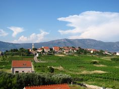 Wine Tasting and Cycling Tour in Lumbarda. Join Korcula Explorer on a wine tasting tour on Korcula Island.