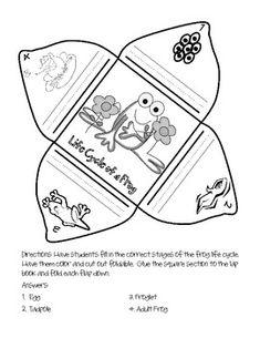 Frog Lap Book and Writing Craftivity - Amanda Hagaman - TeachersPayTeachers.com