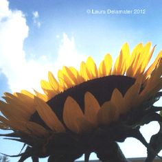 Fun with a camera, high noon sun, and a sunflower.