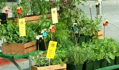 111 Herbs, Vegetables, Edible Flowers, & Fruit to Plant in Your Kitchen Garden