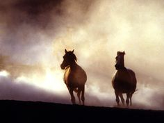 Wild Horse Galloping