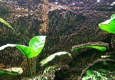 Alga tájékoztató, alga elleni védekezés Green Aqua Plant Leaves, Plants, Seaweed, Plant, Planets