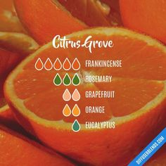 The ultimate essential oil blend software! Create your aromatherapy blends or search through our extensive list. Easily find what blends you can make based on the oils you have. Doterra Citrus Bliss, Essential Oil Diffuser Blends, Doterra Essential Oils, Doterra Diffuser, Doterra Oil, Limpieza Natural, Essential Oil Combinations, Diffuser Recipes, Aromatherapy Oils