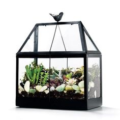 Power plants!Creates the perfect environment for small plants, herbs, and terrarium plants – like moss, succulents, and mini cacti. This greenhouse also helps keep plants safe from seasonal …