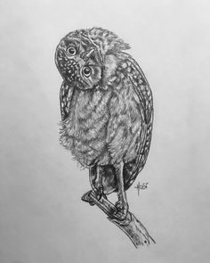 • Oh, Hey...! 🦉🤎 • #heidi #rainbowriverart #art #sketch #graphitedrawing #whatchadoin #drawing #owl #spottedowl #burrowingowl #owls #owldrawing #owlsbyrainbowriverart #heidilechner #owlsofinstagram #owlssome #owlsoftheday #owlart #obsessedwithowls #longislandbeachesrock #love #favorite Rainbow River, Spotted Owl, Burrowing Owl, Graphite Drawings, Owl Art, Hyde, Owls, Pencil, Sketches