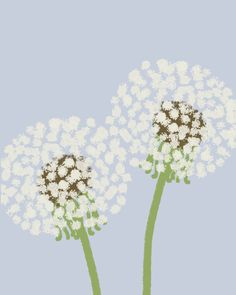 Items similar to Fine Art Print.  Dandelion Puffs.  September 1, 2011. on Etsy