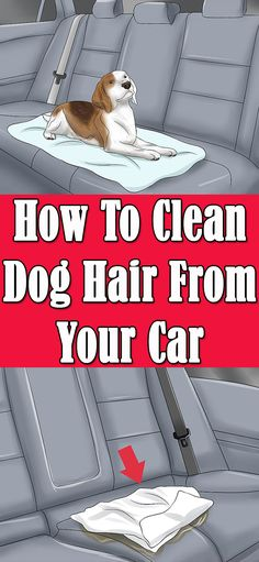 Struggle to clean the dog hair out of your car/carpet/house? The ...
