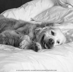 Enjoying the Westin Heavenly Bed