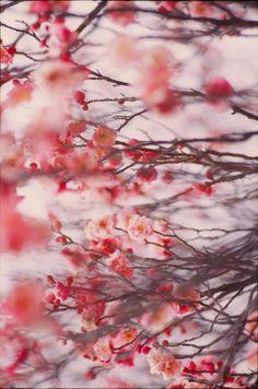 .via Hansom Kim (he sees beauty everywhere)
