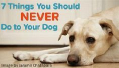 Seven Things You Should Never Do to Your Dog – Dogs-n-Jewels