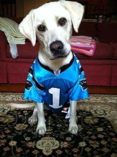 12 Best Carolina Panthers images  e87201081