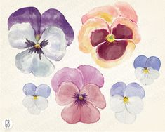 Watercolor pansies pansy hand painted spring by GrafikBoutique