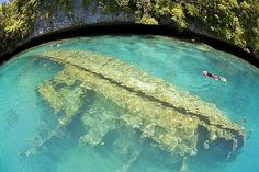 Palau - great for snorkelling, diving, and swimming with stingless jellyfish.