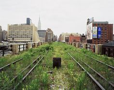 High Line Park, New York City. It is full of abandoned railroads. It's a dramatic contrast of natural and synthetic, especially against the cityscape. High Line Park, New York High Line, Manhattan, Park In New York, New York City, Joel Sternfeld, Man Vs Nature, Urban Nature, Public Garden