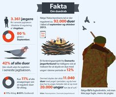 DUER: Ringduer skydes uden for jagttiden: Tusindvis af unger dør af sult 100.000 duer skydes hvert år uden for jagttiden. Det går ud over ungerne. De dør af sult. D. 11. OKT 2014