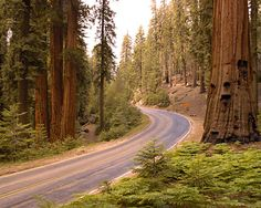 Sequoia National Park - Sequoias are large redwoods that can exceed 300 ft. in ht. They and the park are named for Sequoya a.k.a. George Guess, a Cherokee scholar and leader who developed the Cherokee writing system.