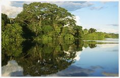 Reserva de Pacaya. Lake Rimachi  This located in the province of Alto Amazonas exactly 545 kilometers from Iquitos in the Pastaza River Basin