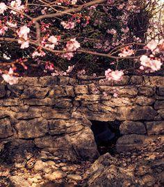 Terranigma: Japanilainen puutarha, Wien, Itävalta Grand Canyon, Nature, Travel, Naturaleza, Viajes, Destinations, Grand Canyon National Park, Traveling, Trips