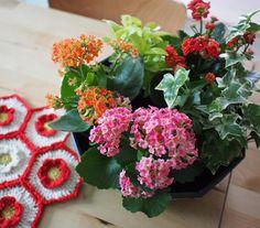 알록달록 꽃이 좋은 계절이예요 . . .  . .  #핸드메이드#코바늘#손뜨개#소품#펠트#취미#소잉#handmade #crochet #craft #crochting#crochetlove#instacrochet#crochetagram#인형#아미구루미#amigurumi #by아얀#아얀씨#crochetaddict#아얀의달빛작업실#손뜨개인형#뜨개인형#코바늘베이비슈즈 #손뜨개블랭킷 by by_ahyane