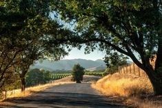 20 Great Tips For Traveling In Wine Country