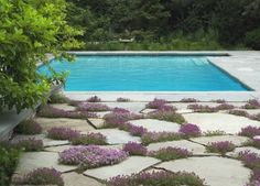 Creeping Thyme - pool - chicago - by The Garden Consultants, Inc. Plants for between pavers Flagstone Pavers, Slate Paving, Concrete Paving, Cement Patio, Low Water Landscaping, Creeping Thyme, Crazy Paving, Desert Botanical Garden, Drought Tolerant Plants