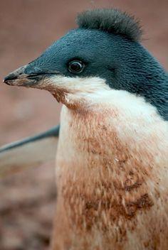 Fashion Penguin