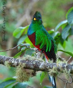 Most Beautiful Birds In The World / Las Aves Más Hermosas del Reino Animal | 20Minutos (Listas)