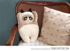 Grumpy Cat pillow. He hates it.