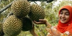 This brings a durian in aceh