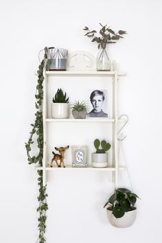 Make Every Day Feel Like Summer with Houseplants | candypop.uk.com
