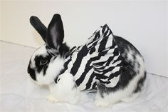 zebra print harness for your rabbit. Made to order
