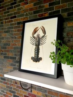 Lobster - Camilla Edfors #nordicdesigncollective #camillaedfors #lobtser #hummer #kitchen #kitchenposter #poster