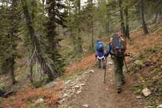 fall colors, hiking with kids, washington native plants, ingalls lake trail